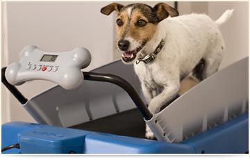 dog conditioning