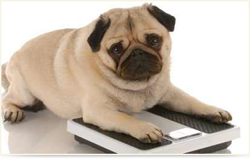 dog weight Loss
