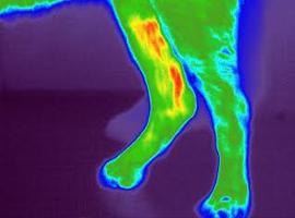 Canine digital thermal imaging