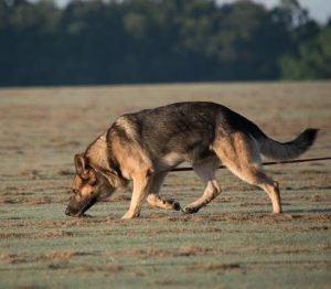 Dog Training Classes Baldwin County Alabama | K9 Strong